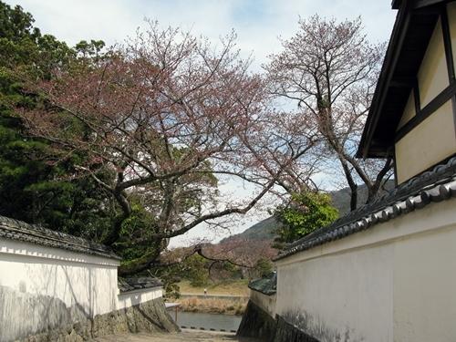おかげ横丁・おはらい町 桜情報_f0129726_21224024.jpg