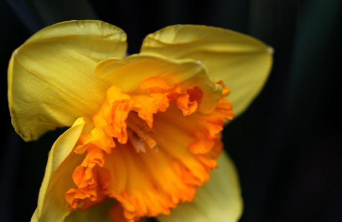 福島市 「四季の里の花」_d0106628_06363257.jpg