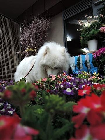 Spring has come_c0062832_861339.jpg