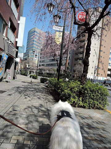 Spring has come_c0062832_862219.jpg