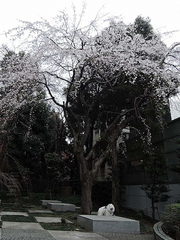 Spring has come_c0062832_864169.jpg