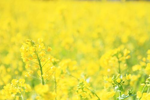 快活な鮮黄色_e0149941_22513225.jpg