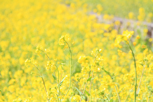 快活な鮮黄色_e0149941_22514391.jpg