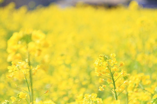 快活な鮮黄色_e0149941_22515051.jpg