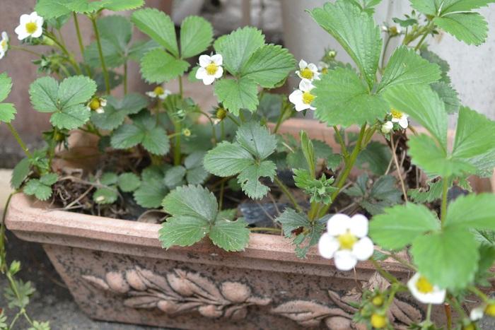 急に春っぽくなってきましたねー!&3月31日(木)のランチメニュー_d0243849_23244711.jpg