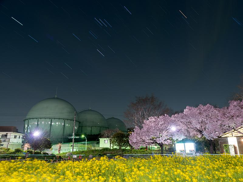 芦花公園の桜_a0003650_2263919.jpg