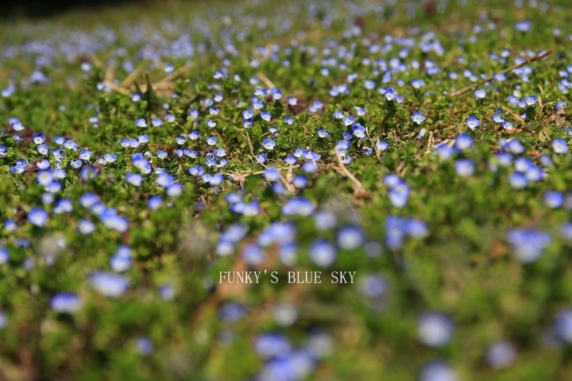 オオイヌノフグリ咲く草原で♪_c0145250_11223336.jpg