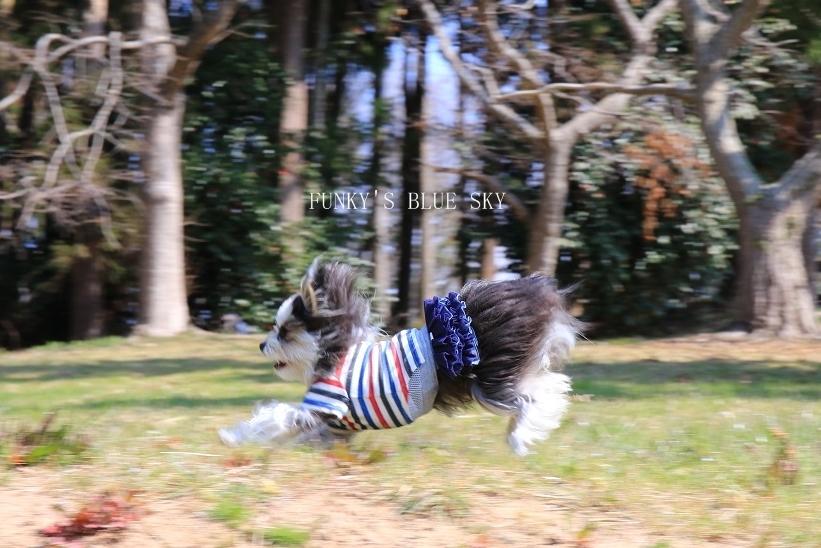 オオイヌノフグリ咲く草原で♪_c0145250_11224294.jpg