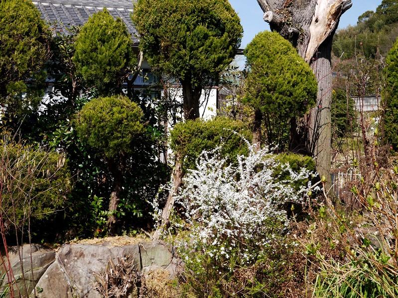 雪柳咲く里山を行く_b0093754_20403438.jpg