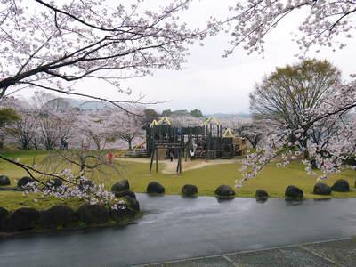 菊池神社、菊池公園の桜photoコレクション 2016_a0254656_19454968.jpg