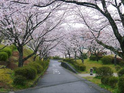 菊池神社、菊池公園の桜photoコレクション 2016_a0254656_19512550.jpg