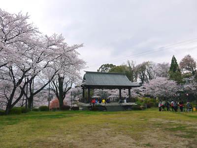 菊池神社、菊池公園の桜photoコレクション 2016_a0254656_202217.jpg