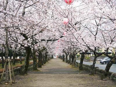 菊池神社、菊池公園の桜photoコレクション 2016_a0254656_2022538.jpg