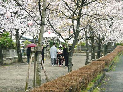 菊池神社、菊池公園の桜photoコレクション 2016_a0254656_20334069.jpg
