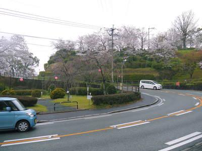 菊池神社、菊池公園の桜photoコレクション 2016_a0254656_2071257.jpg