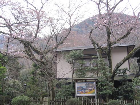 2016年 桜開花実況中継_c0078659_17372080.jpg