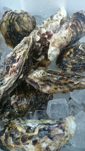 ロックな牡蠣、本日到着!_f0187266_17235408.jpg