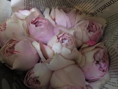 オークリーフ(春のマハ)_f0049672_18495599.jpg