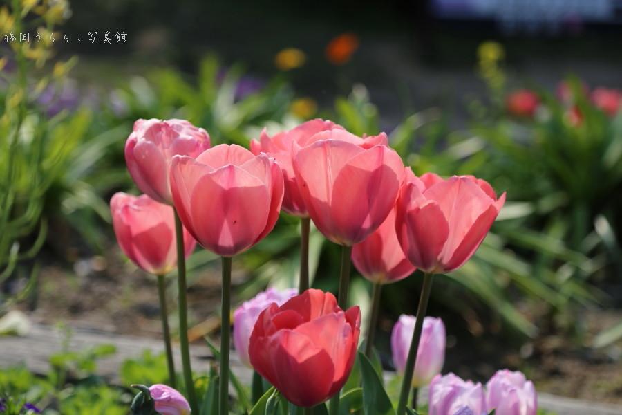 みなぎる春のちから_a0262573_23190479.jpg
