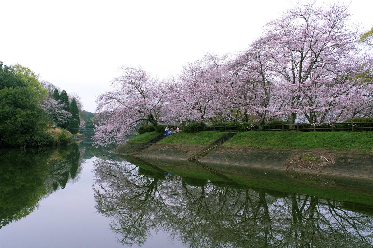 今日は花見 立岡の桜_e0174091_14343219.jpg