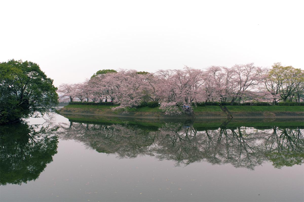 今日は花見 立岡の桜_e0174091_14344112.jpg
