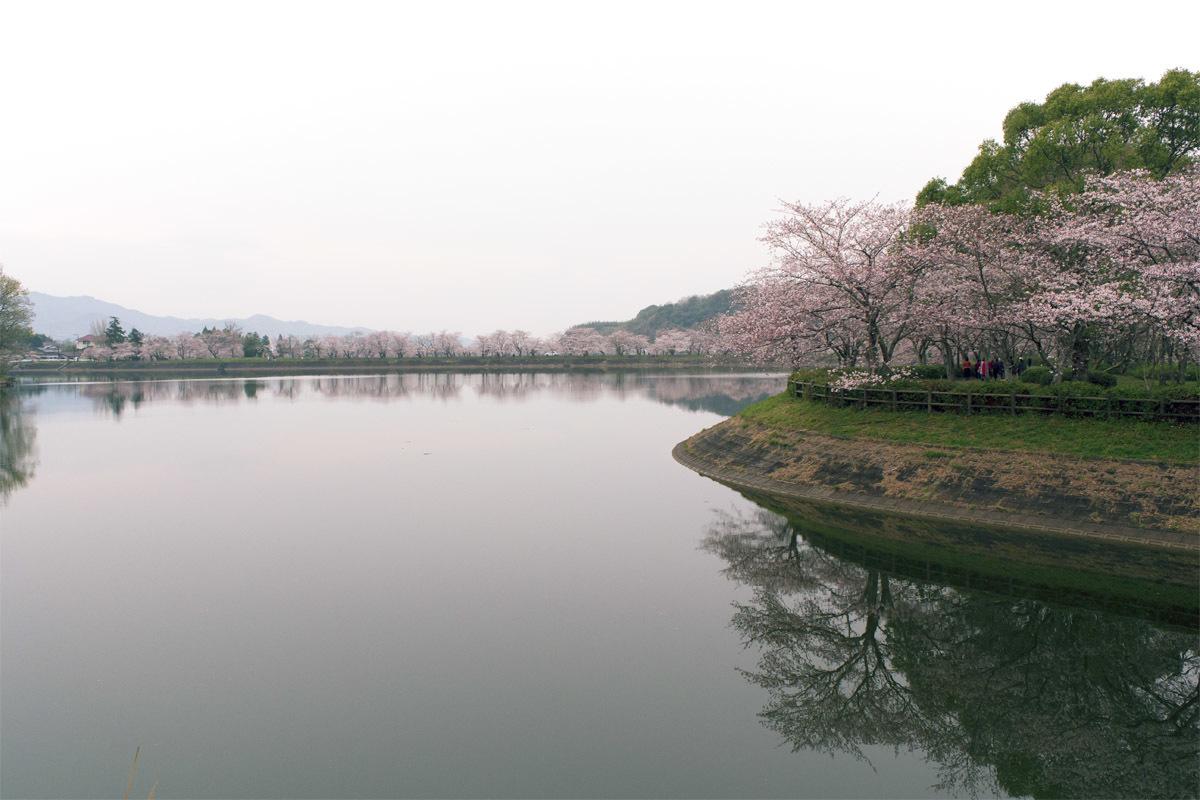 今日は花見 立岡の桜_e0174091_14345571.jpg