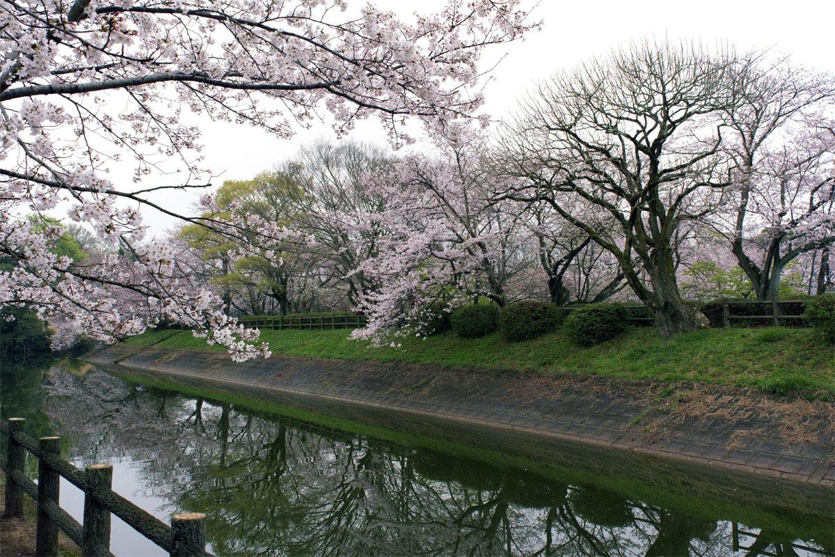 今日は花見 立岡の桜_e0174091_14434451.jpg