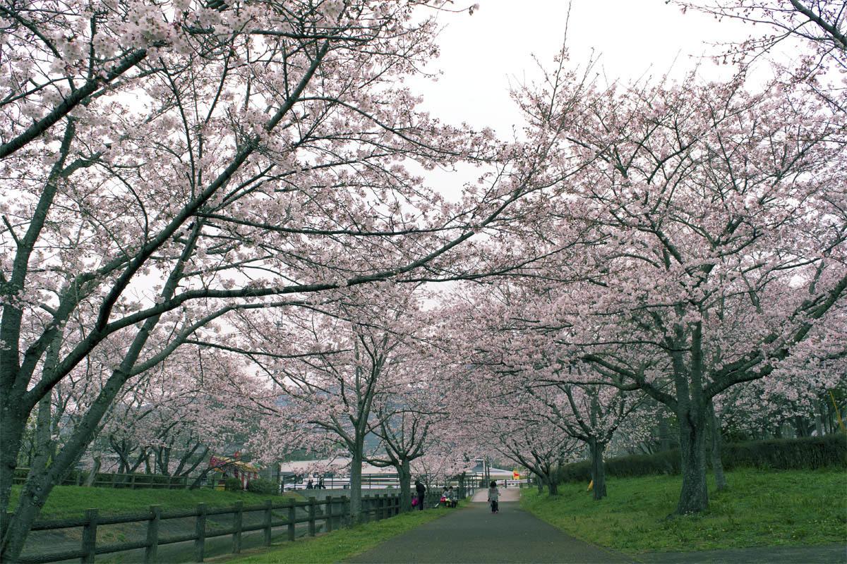 今日は花見 立岡の桜_e0174091_14435790.jpg