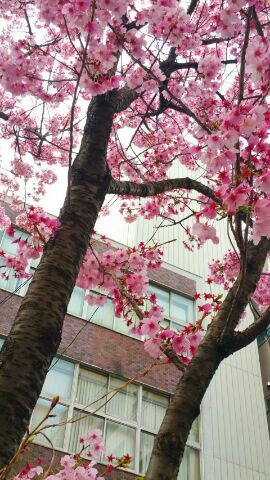 盛春の気付きーその7ー素敵な言葉集よりー_e0119092_11470979.jpg