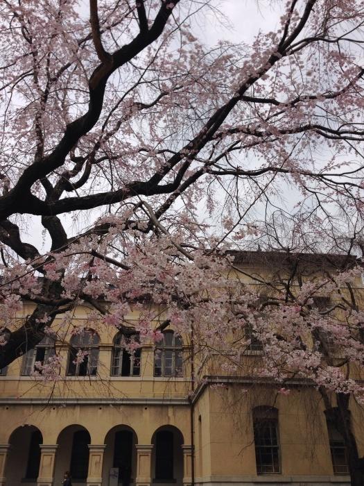 府庁の春の展覧会_c0100195_20182577.jpg
