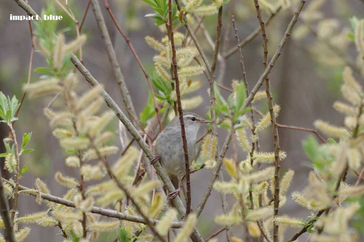 春が訪れた自然公園♪_a0355908_19552842.jpg