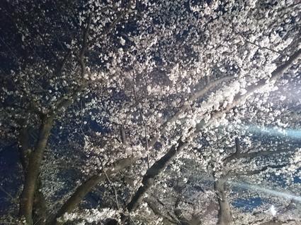 3/30 夜桜見物@会社_b0042308_11594643.jpg