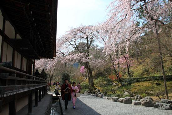 16 桜だより16 嵐山1天龍寺_e0048413_2111507.jpg