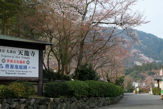 16 桜だより16 嵐山1天龍寺_e0048413_219544.jpg