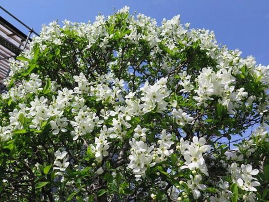 春の花々@鎌倉・大巧寺_c0192215_213222.jpg