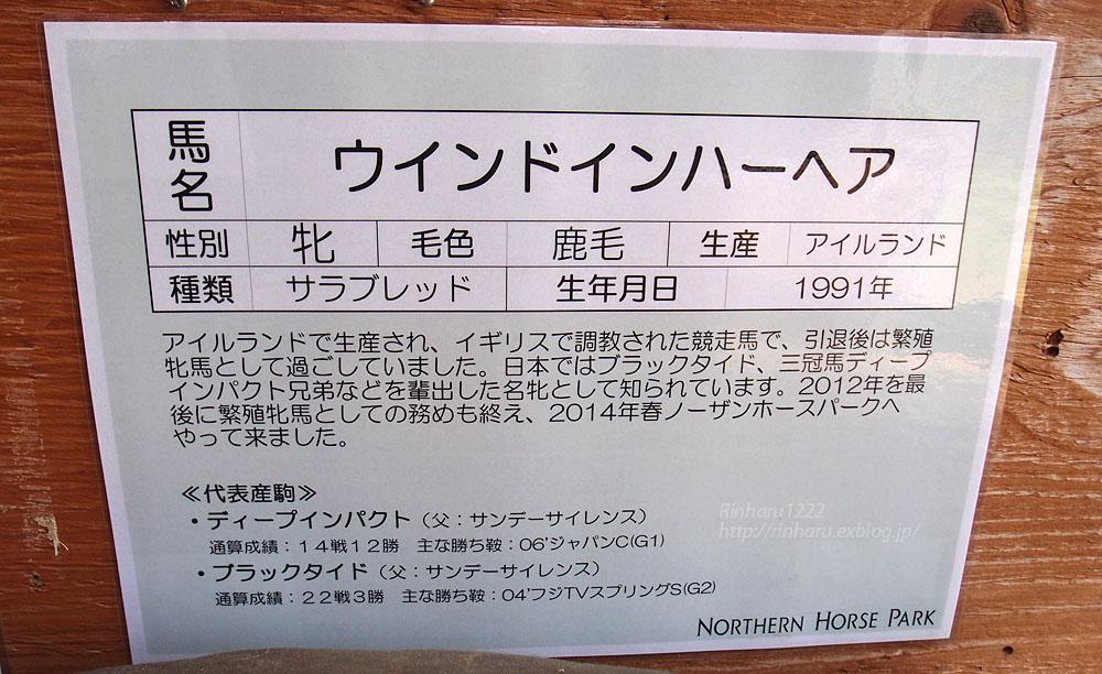 2015.5.1 ノーザンホースパーク☆ウインドインハーヘア【Thoroughbred】_f0250322_21422419.jpg