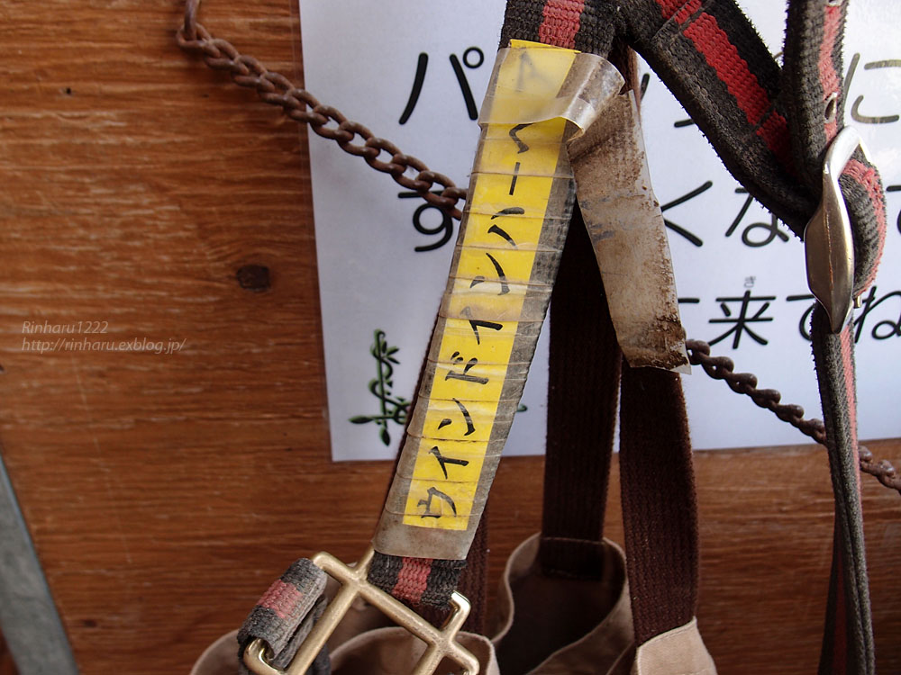 2015.5.1 ノーザンホースパーク☆ウインドインハーヘア【Thoroughbred】_f0250322_2142288.jpg