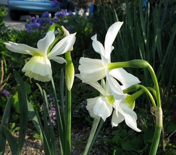 春や春!_f0129726_21364885.jpg