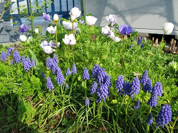 春や春!_f0129726_22041465.jpg