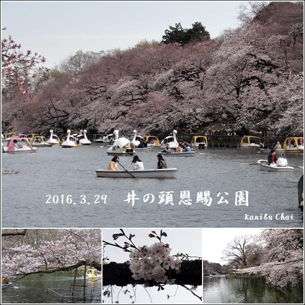 和食ランチと桜と…_c0079828_013282.jpg