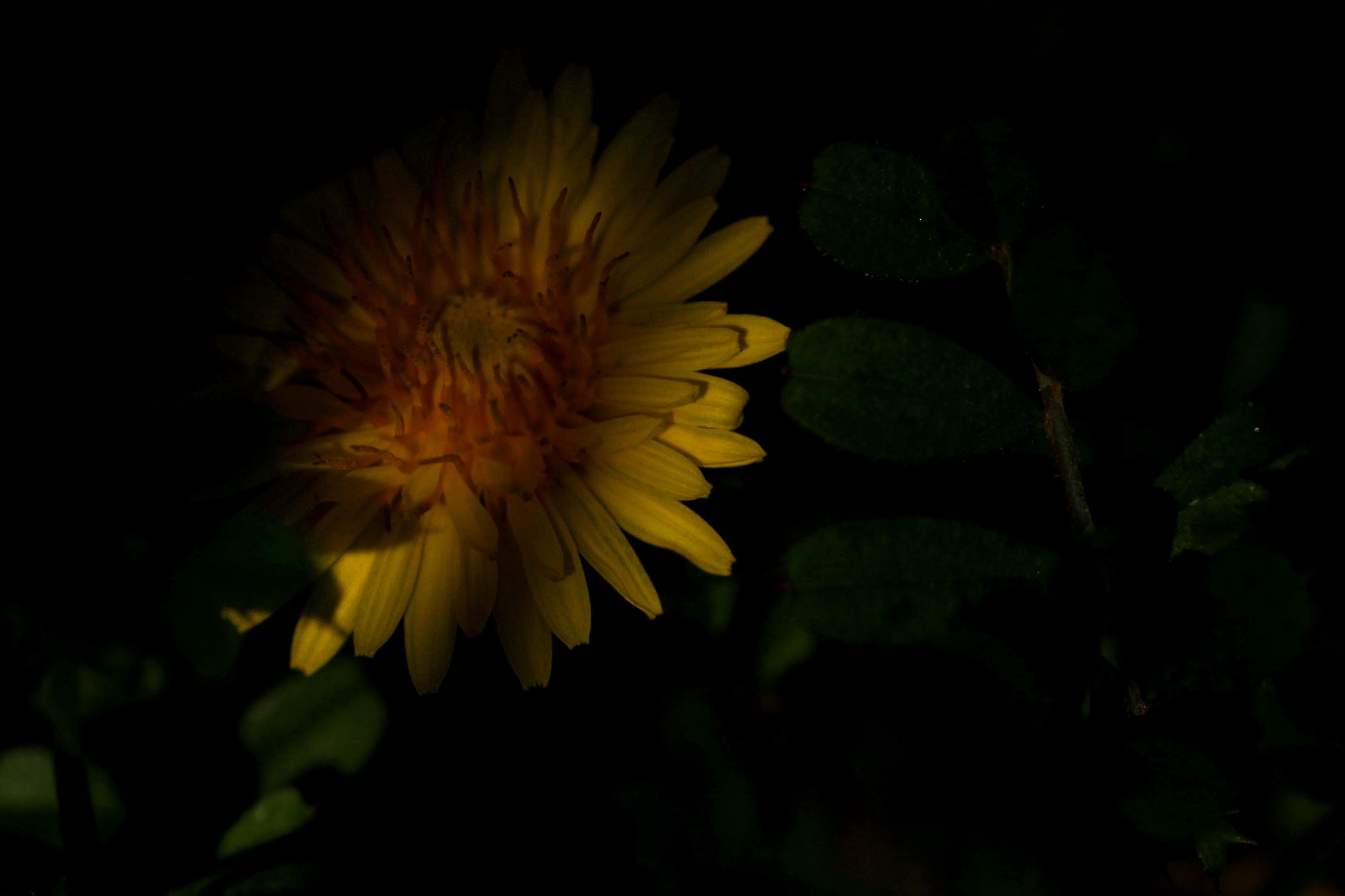 福島市 自宅付近の野の花」_d0106628_06504049.jpg