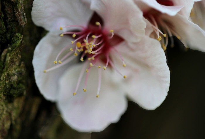 福島市 自宅付近の野の花」_d0106628_06510055.jpg