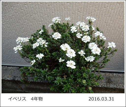 e0033229_18581635.jpg