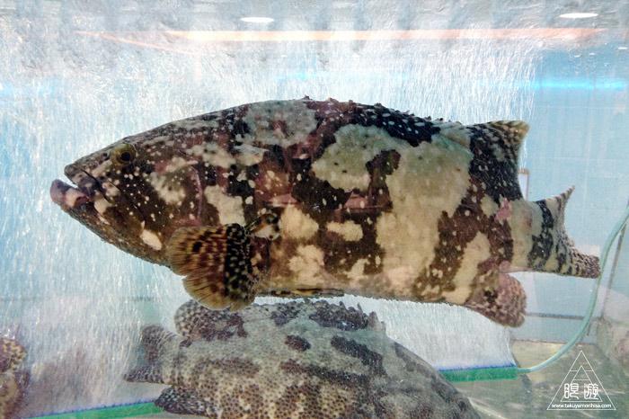 406 Tai Kok Tsui ~ハタ科最大の魚が~_c0211532_0344666.jpg