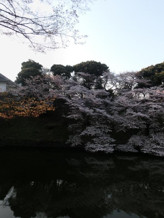 靖国神社~千鳥ヶ淵_e0253932_8404297.jpg