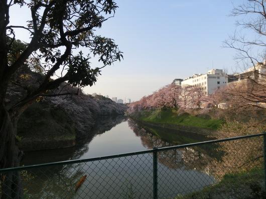 靖国神社~千鳥ヶ淵_e0253932_8405979.jpg