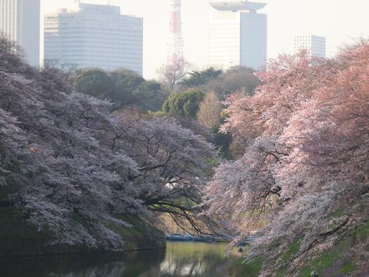 靖国神社~千鳥ヶ淵_e0253932_8411970.jpg