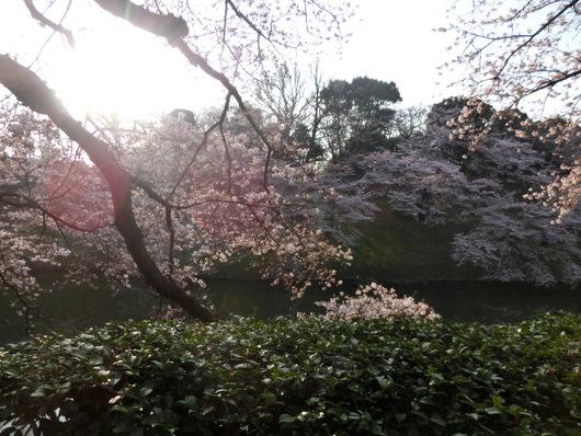 靖国神社~千鳥ヶ淵_e0253932_841464.jpg