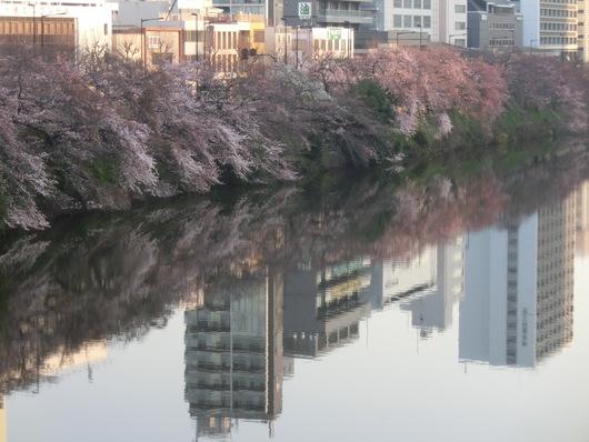 靖国神社~千鳥ヶ淵_e0253932_8422759.jpg