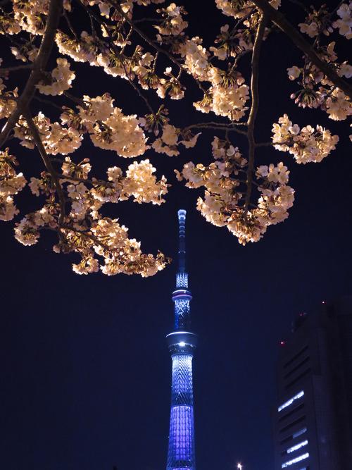 2016.3.30桜色の東京スカイツリーと夜桜3枚(隅田公園)_e0321032_15491172.jpg